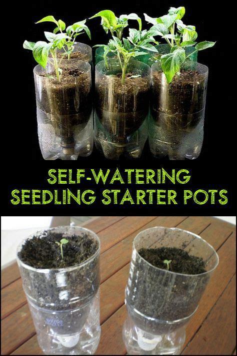 diy  watering seed starter pots gardening