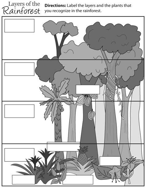 rainforest layers education ideas pinterest