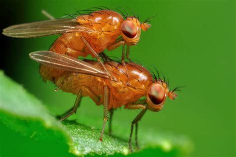 fruit flies fruit flies concussions cerebrovortex