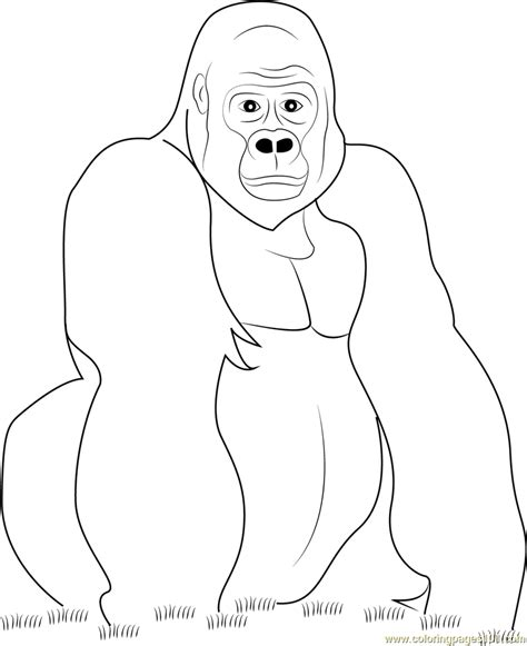 images to color gorilla look at you coloring page free gorilla coloring