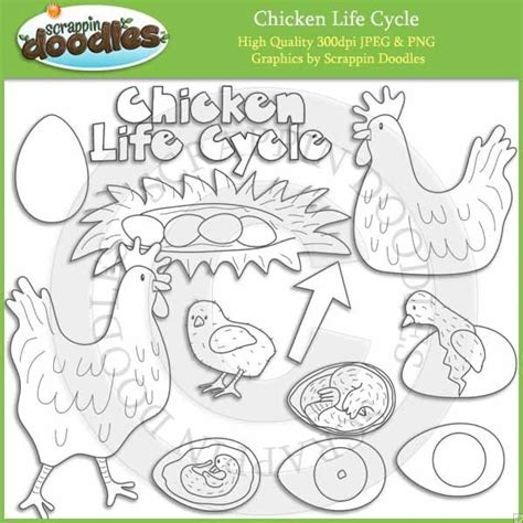 life cycle of a chicken photo cut out 34 best images about chicken life cycle on pinterest