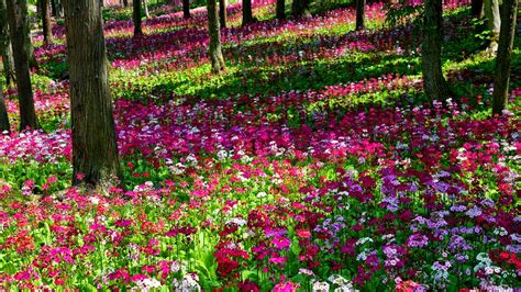 Awesome Flower Garden Weneedfun Flower Gardens In