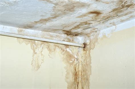 White Mold On Ceiling by Mold On The Ceiling And Pipe On The Wall Stock Photo
