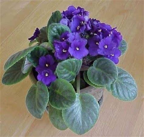 fiori da vaso fiori da vaso fiorista