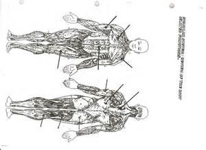muscular system diagram muscular system diagram worksheet craftbrewswag info