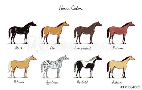 difference between american spirit colors color chart set equine coat colors with text types