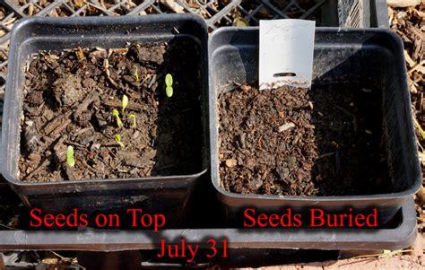 Benja Sw Butterfly Top milkweed seeds