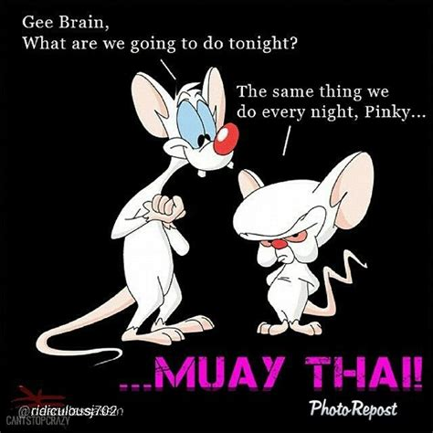 Muay Thai Memes - muay thai memes and comedy martial arts mma fighters