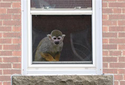 keeping  primates  pets rspca campaigns
