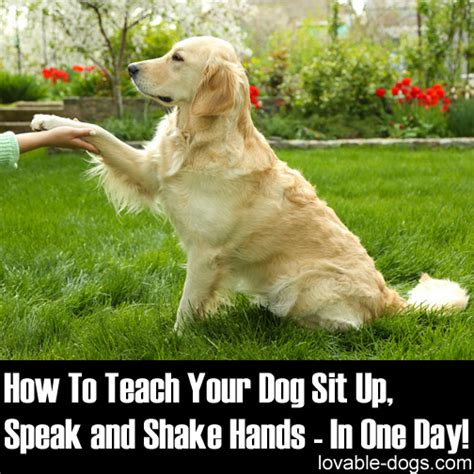 how to my to shake lovable dogs how to teach your sit up speak and shake in one day