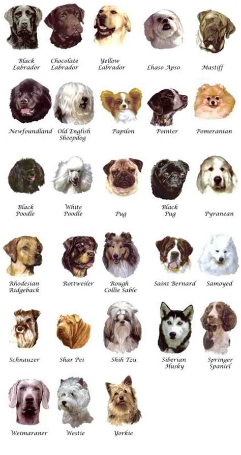 pictures  dog breeds dog breeders guide
