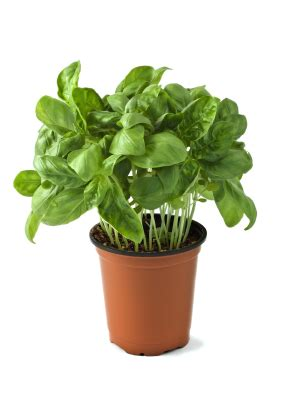 Starting A Backyard Nursery Starting A Herb Business In 6 Easy Steps Profitable Plants