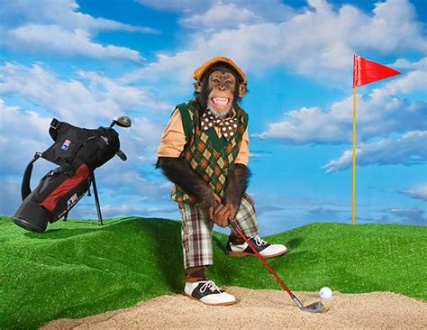 Find To Play Golf With Jon Stewart Apologizes For Not Voting Joke Doesn T Find Anything About