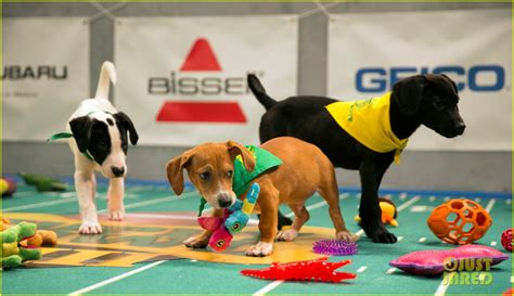 what time is puppy bowl 2017 puppy bowl 2017 meet the dogs the more photo 3853411 2017