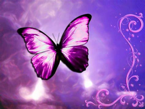 imagenes de mariposas fosforescentes im 225 genes de mariposas moradas im 225 genes y fotos