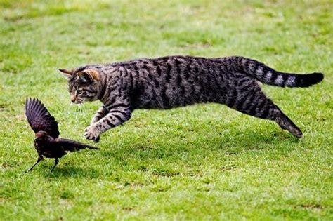 Tempat Makan Burung Liar 5 cara menjinakan kucing liar paling uh berdasarkan