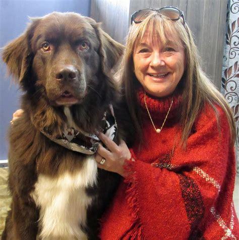 moncton new brunswick pet adoption maritime greyhound charlotte elite dog grooming academy