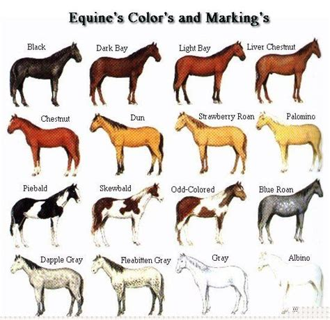 horse color pattern crossword free horse pictures to color coat colors and markings of