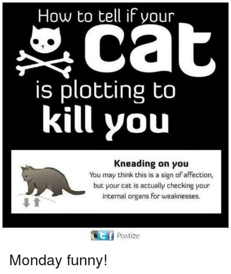how to tell if your cat is plotting to kill you the oatmeal how to tell if your cat is plotting to kill you kneading