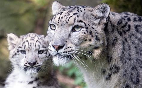 reset nvram snow leopard big cats are so fucking cool page 2 resetera