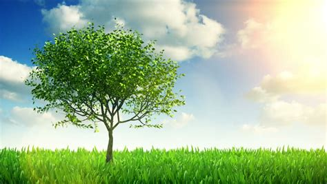grow tree growing tree and grass hd stock clip