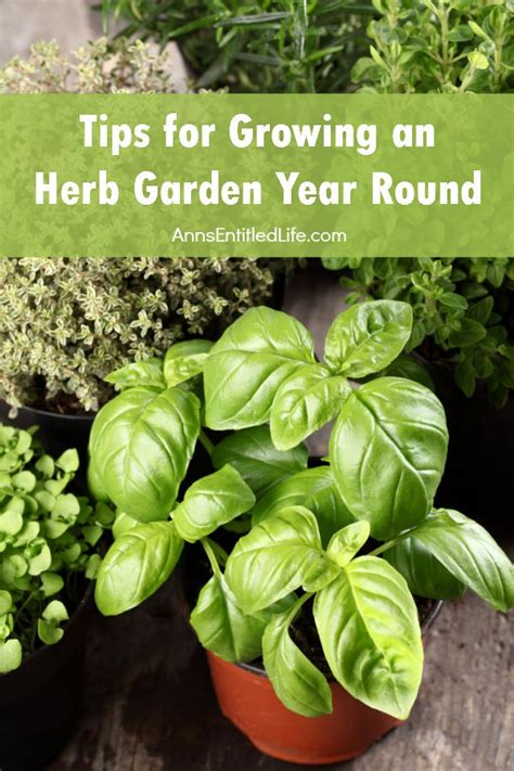 tips  growing  herb garden year