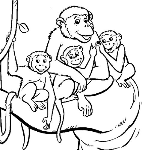 vervet monkey coloring page animals town animals color