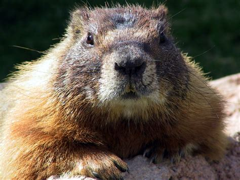 groundhog day like qpc contact centre management it doesn t to feel