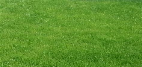 lawn and landscape services to enhance your home lawn and landscape