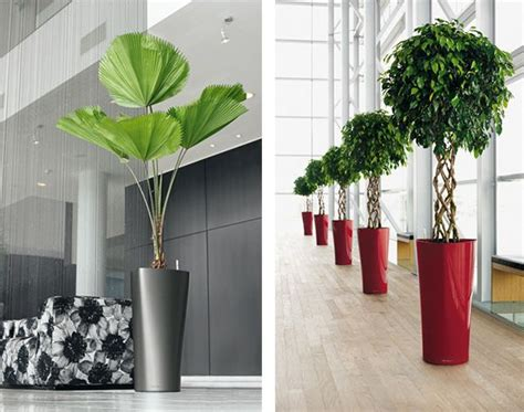 modern planter delta  lechuza lechuzas plantas