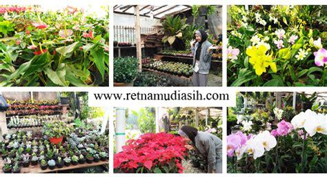 Jual Bibit Bunga Di Yogyakarta cari bibit tanaman bunga buah unggulan di jogja yuk