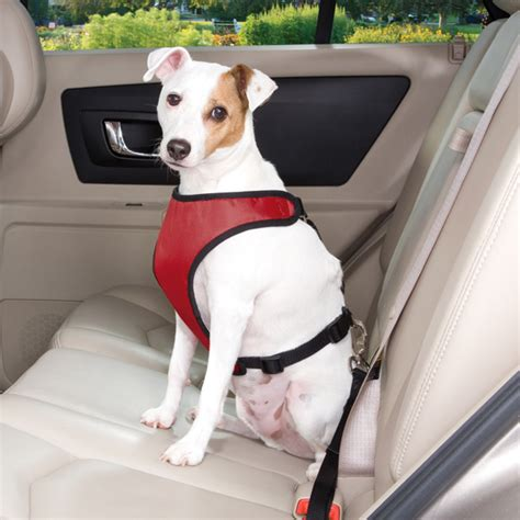 car harness for dogs what is the best car seat harness for dogs upcomingcarshq