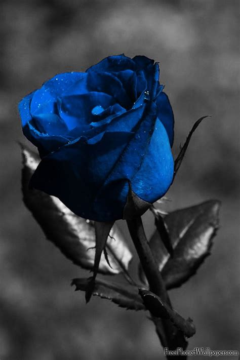 dark blue rose tattoo flower tattoos collections blue meaning