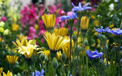 photos of spring flowers flower meadow spring wallpaper 22177477 fanpop