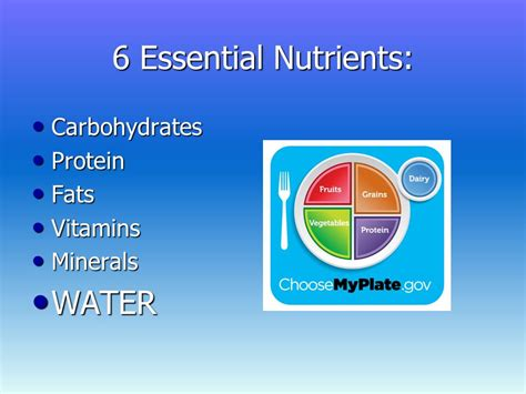 carbohydrates proteins fats and water are essential water the forgotten nutrient ppt
