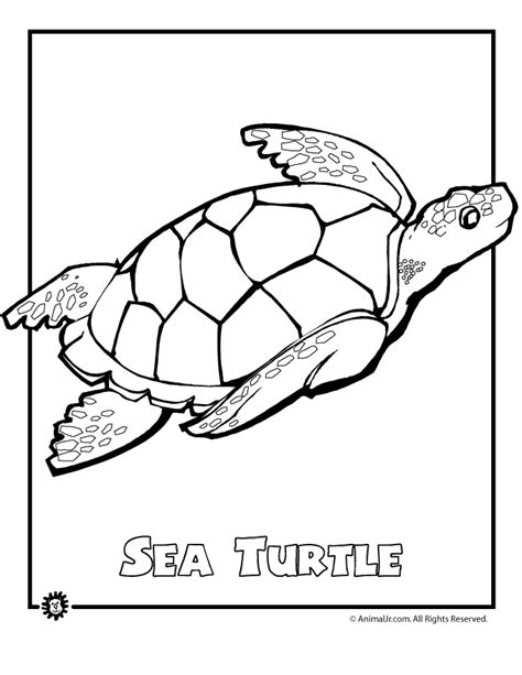 coloring page of a sea turtle ocean animal coloring pages sea turtle endangered page