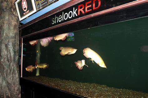 Aquarium Tv 21 Air Tawar menyelami dunia bawah laut di sea world indonesia