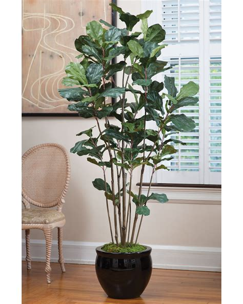 tree plant value priced 7 fiddle leaf fig silk tree at petals