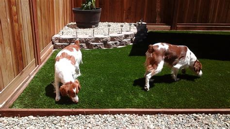 artificial turf for dogs 6 ways artificial turf for dogs is safe and beneficial