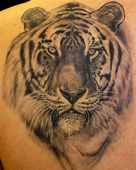 15 best tiger tattoo designs and meanings with images