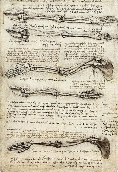 leonardo da vinci biography encyclopedia studies of the arm showing the movements made by the