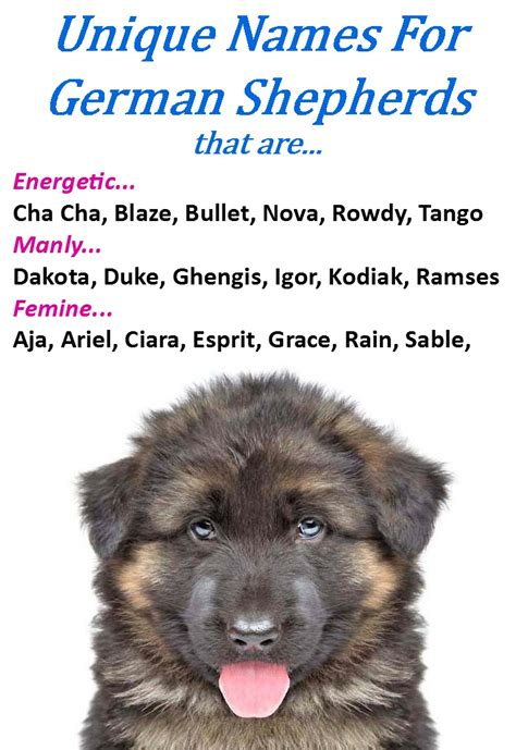 german shepherd puppy names german shepherd names gsd names