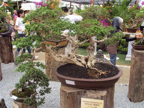 hitam putih kehidupan bonsai