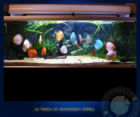vasca per discus acquari italiani la tavolozza nell acquario dei discus