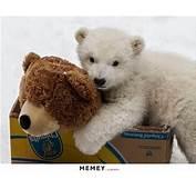 Teddy Bear Memes  Funny Pictures MEMEYcom