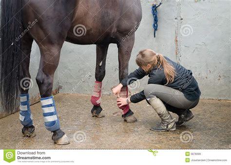 mujer que hace el amor con caballo mujer con el caballo que hace un masaje en sus piernas