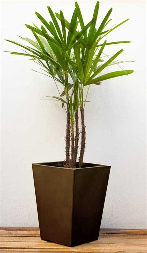 imagenes de macetas minimalistas plantas para macetas exterior resistentes planos maceta