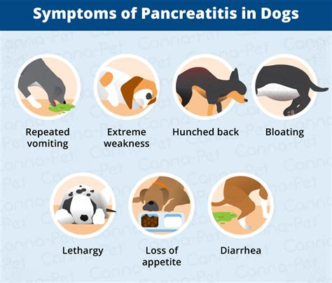 pancreatitis symptoms in dogs pancreatitis in dogs symptoms causes more canna pet