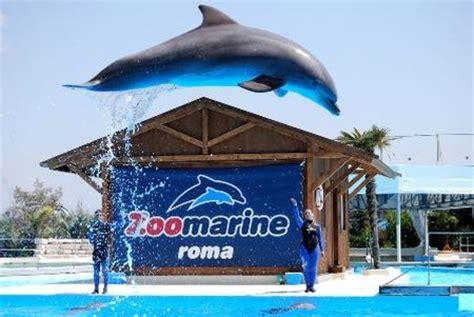 ingresso zoomarine viaggi offerta ingresso al parco zoomarine da napoli