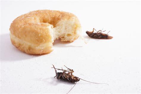 come eliminare scarafaggi in cucina scarafaggi in cucina 4 modi per identificare uno